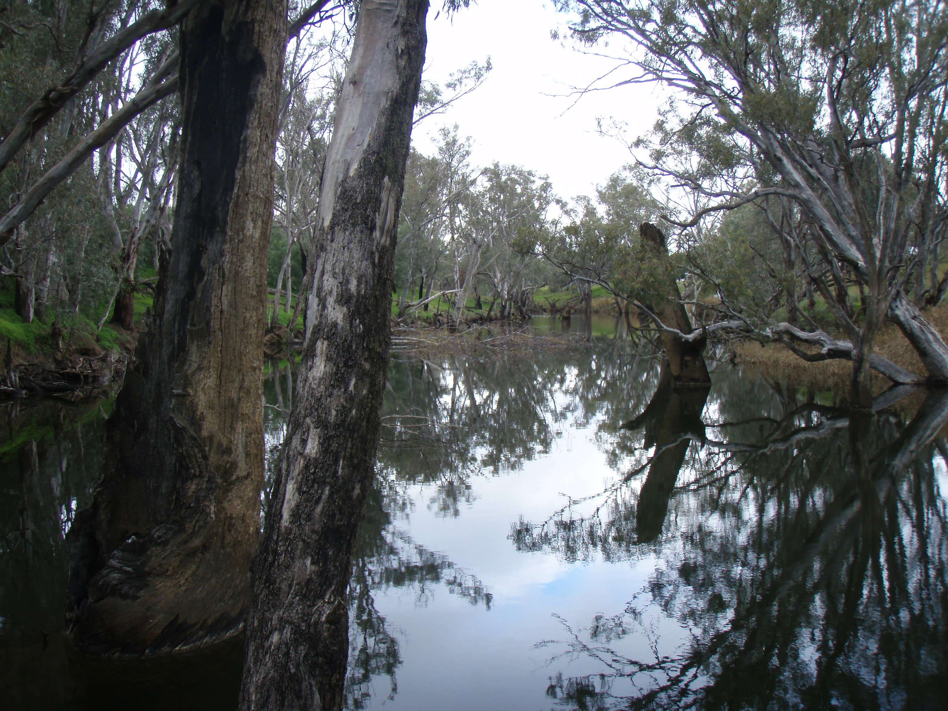 Loddon River at Bridgewater near Bedrock Outcrop