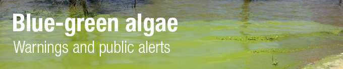 Blue Green Algae page header